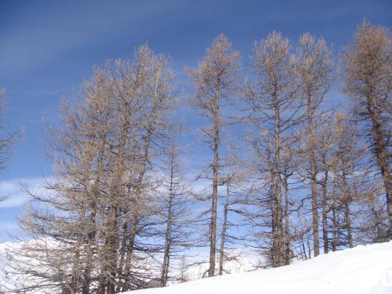 Ski dans les Mélèzes à Bardonecchia (Italie)
